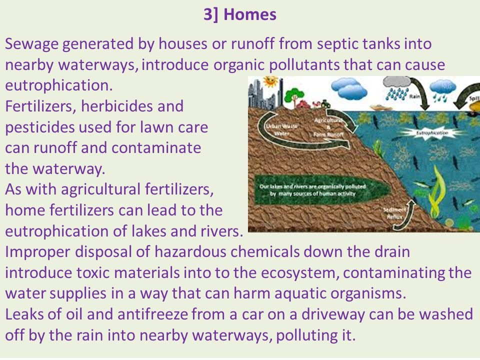 3] Homes Sewage generated by houses or runoff from septic tanks into nearby waterways, introduce organic pollutants that can cause eutrophication.